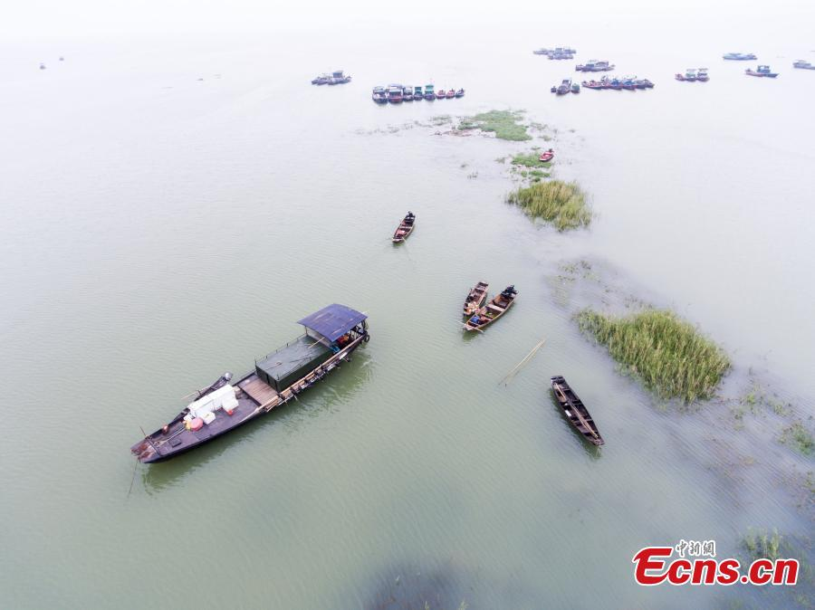 Rain grows Poyang Lake