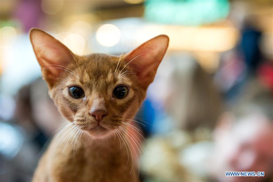 International cat show held in Lithuania