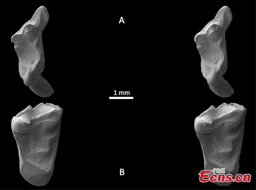 UK student discovers 145 million-year-old 'rat' teeth