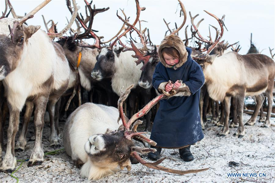 Daily life of Nenets in northern arctic Russia