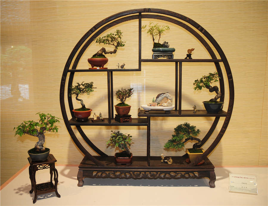 Zhejiang-style bonsais on show in Hangzhou