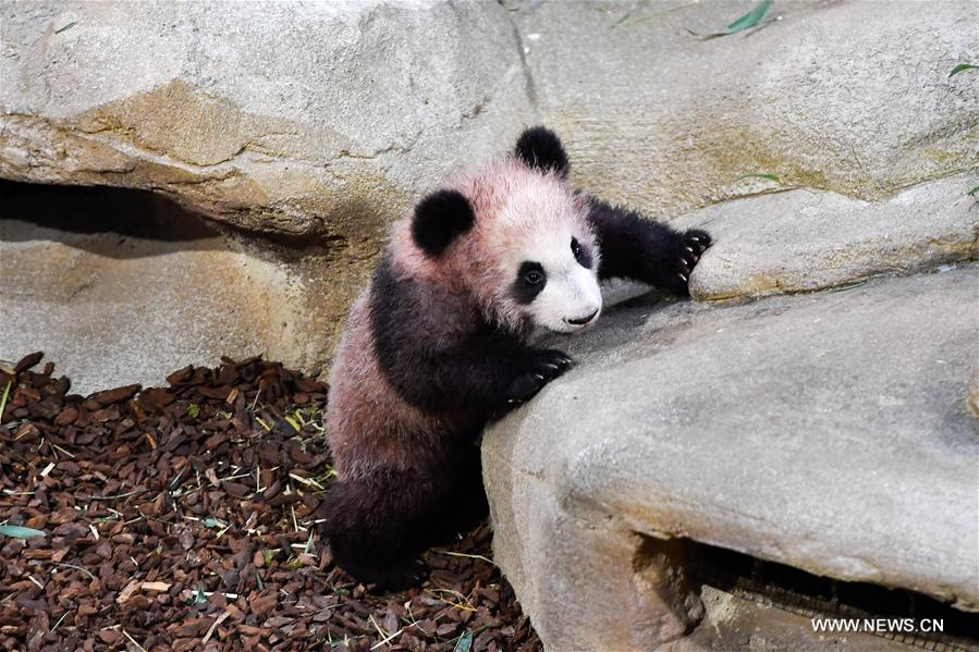 1st panda cub born in France