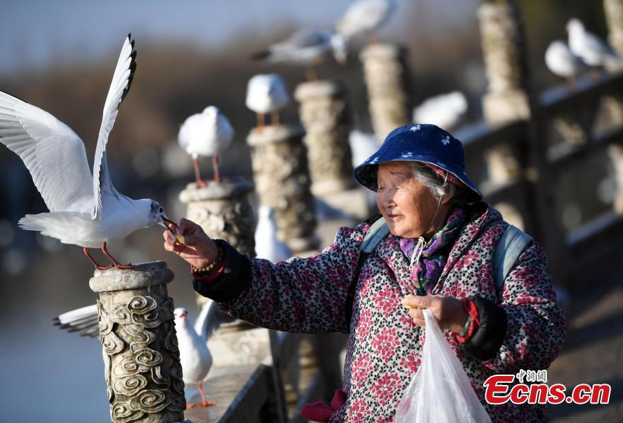 Elderly woman makes food for birds for 30-plus years
