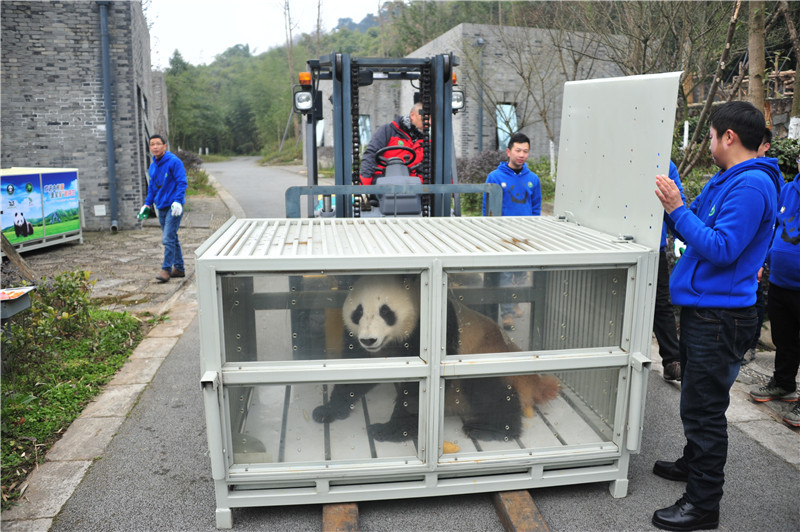 Pandas head to Finland for 15-year research program