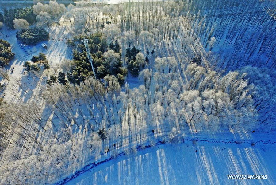 Northeast China's Shenyang covered by rime