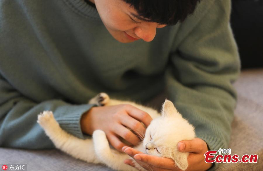 Student promises superb care for cats over Spring Festival