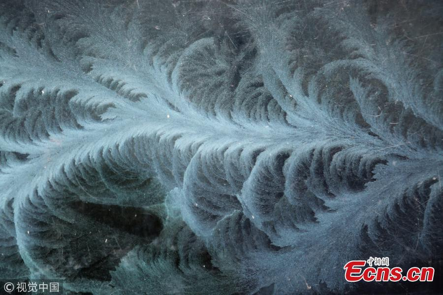 Exquisite Ice flowers on window glass