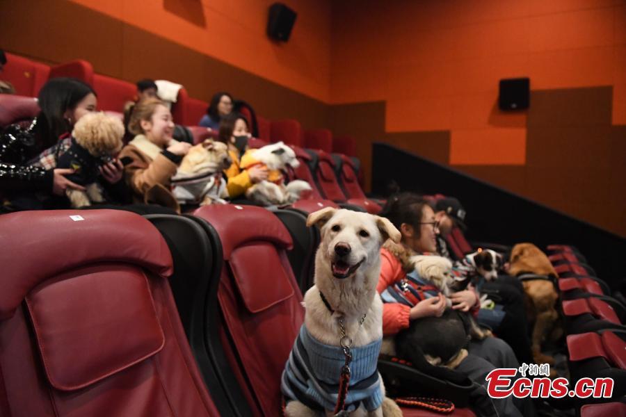 Canine buddies enjoy a film for Spring Festival