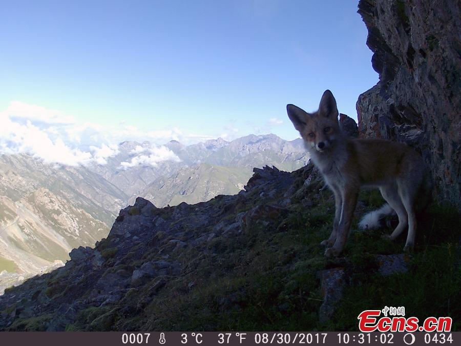 Nature reserve releases photos of wild animals