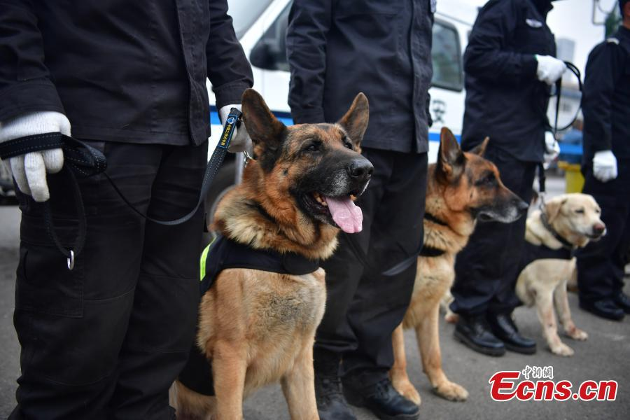 Police dogs safeguard railway station