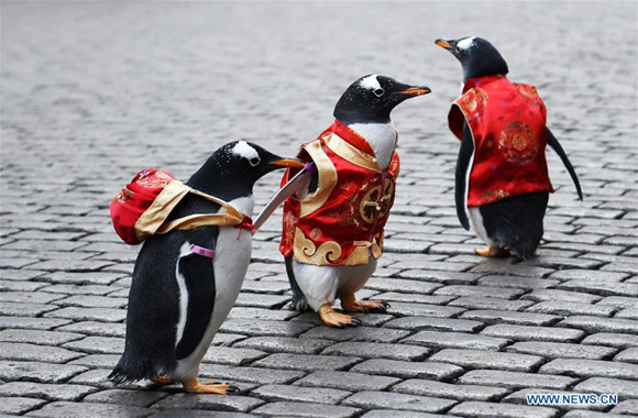 Penguins in Tang suit show on Harbin Central Street