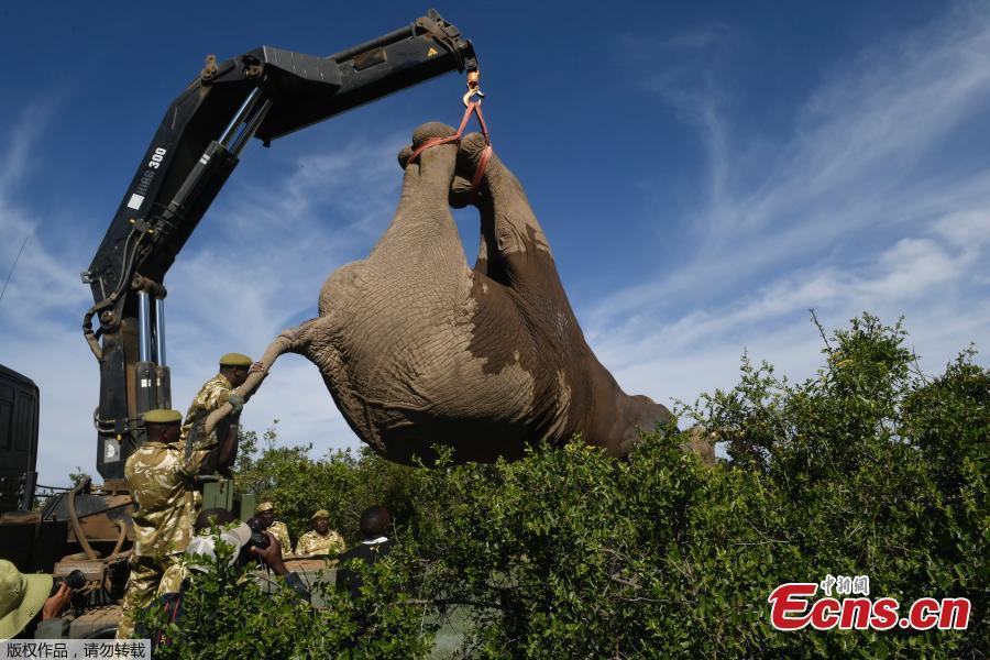 Kenya elephants on the move