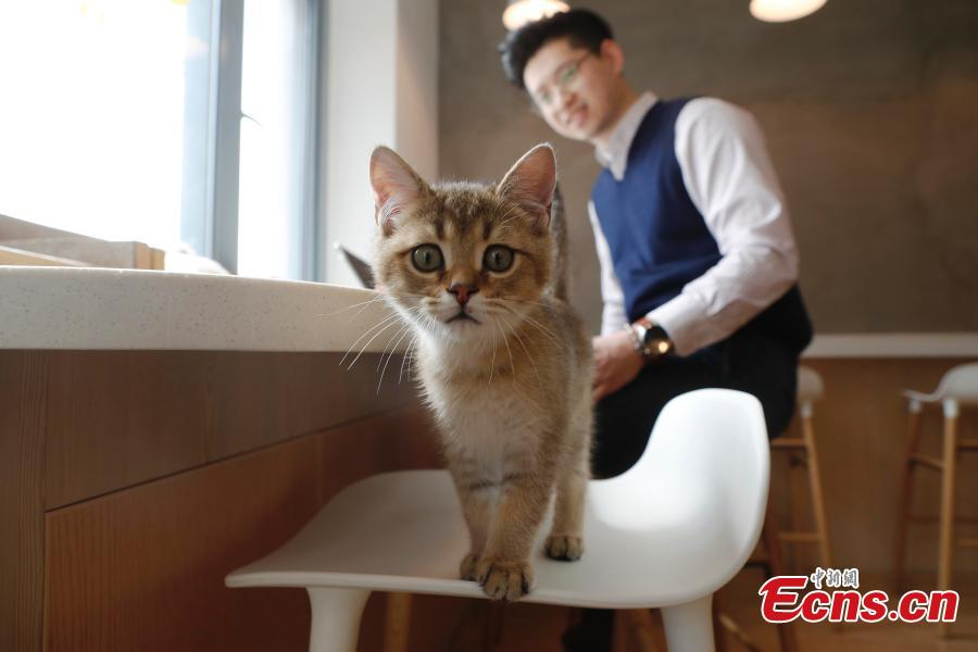 Cat cafe offers 'purr therapy' to customers