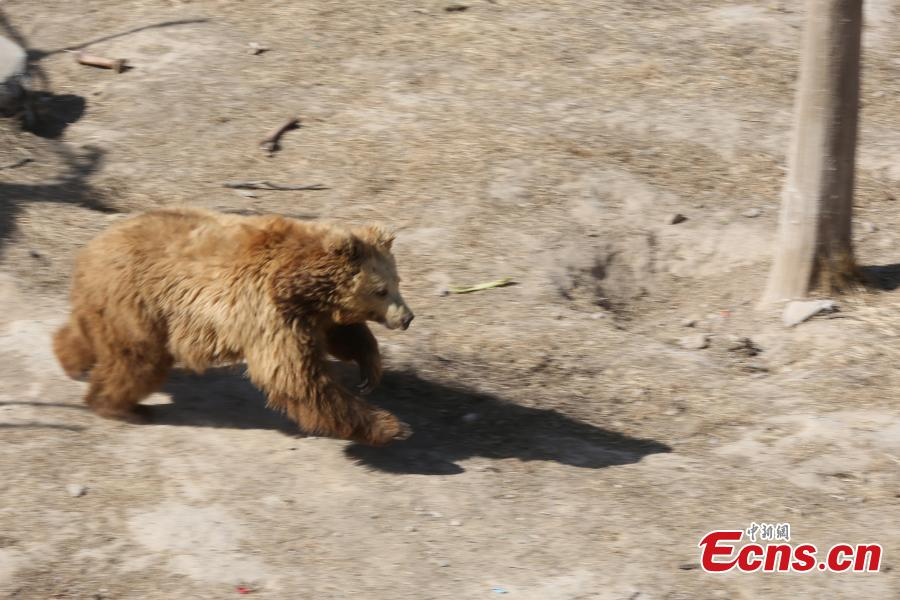Wild animals in spring time at Qinghai-Tibet Plateau Wildlife Zoo