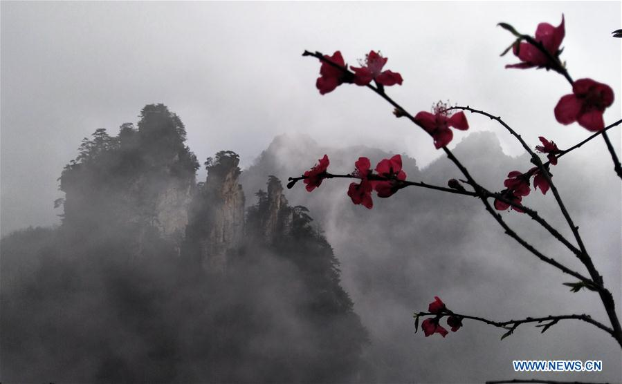 Scenery of Tianzi Mountain in Hunan
