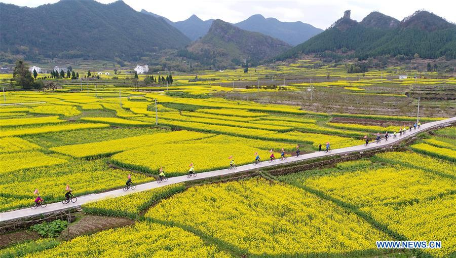 Scenery of cole flowers across China
