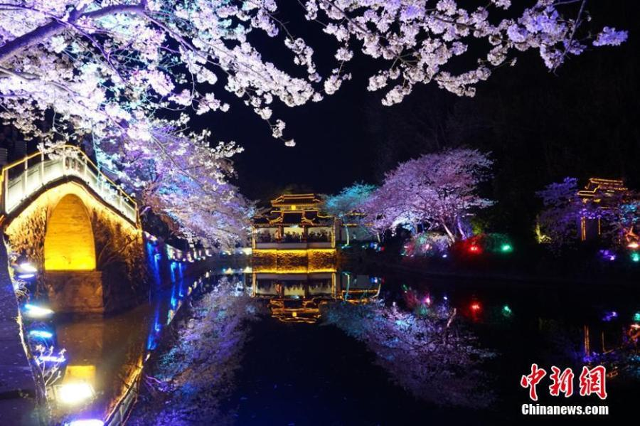 Night scene of cherry blossoms in Wuxi a great attraction