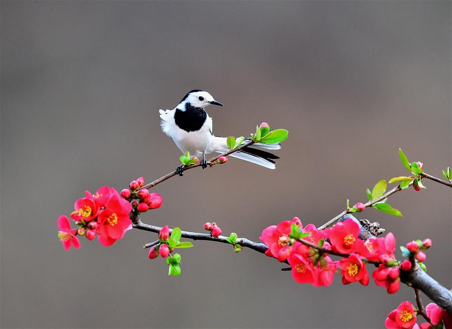Birds seen at Lushan County, Henan