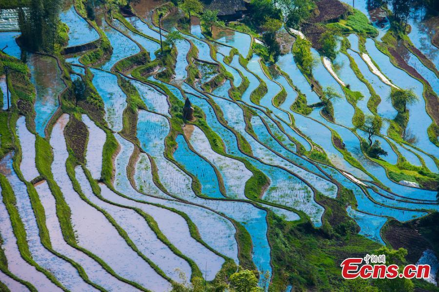 Rain transforms terraced paddy fields