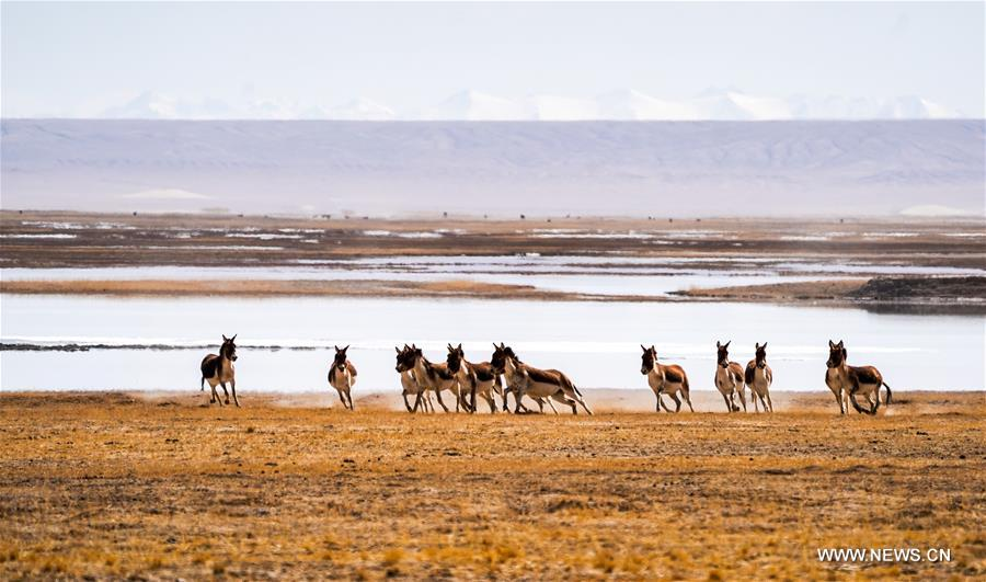 Scenery of Altun Mountains National Nature Reserve in Xinjiang