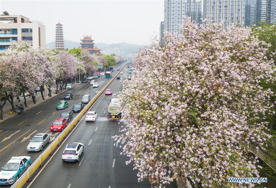 People enjoy spring scenery across China
