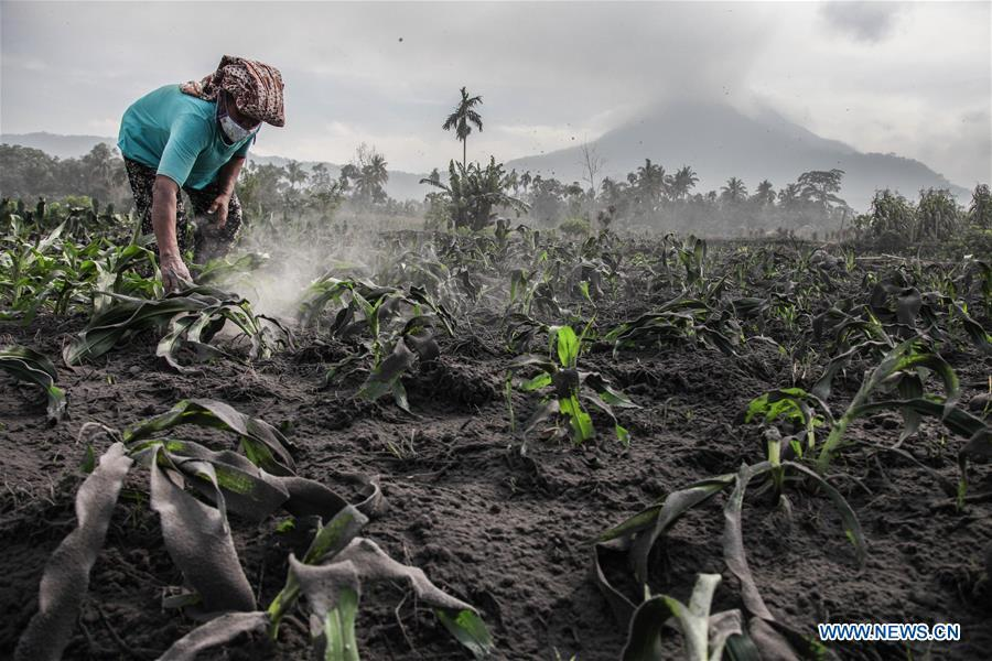 Mount Sinabung volcano spews volcanic ash in Indonesia