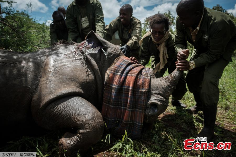 Kenya tags rhinos in conservation drive