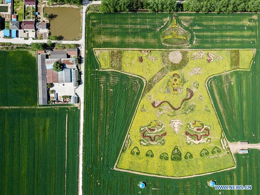 Pattern of dragon robe seen in cole flower field
