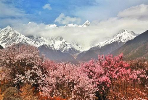 Flowers bloom along Nyang River in Tibet