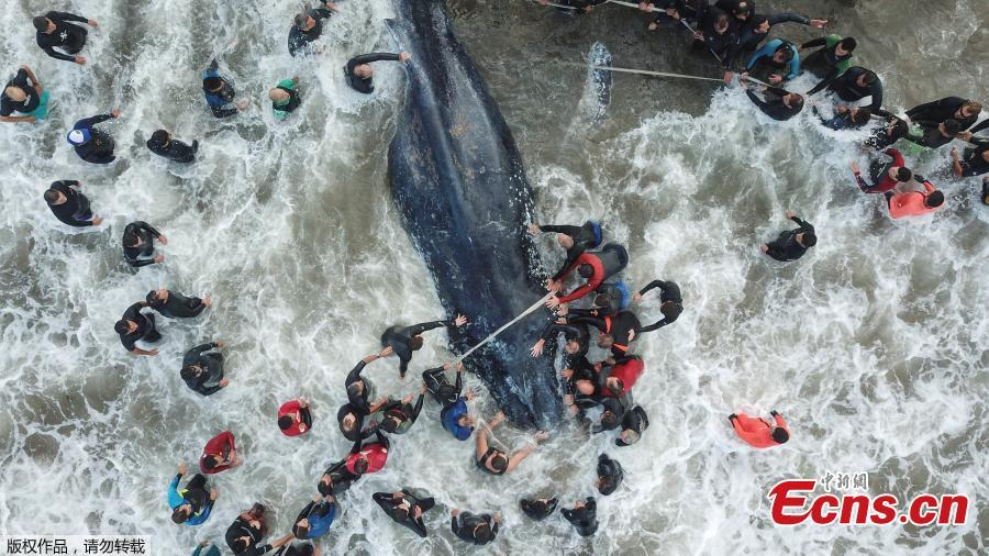 Stranded whale dies in Argentina despite rescue efforts
