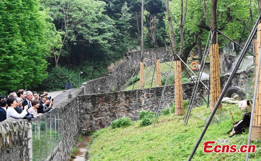 Austrian President leads delegation to visit Chengdu