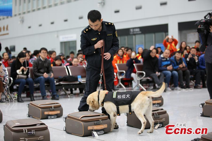 Detector dogs in skills competition
