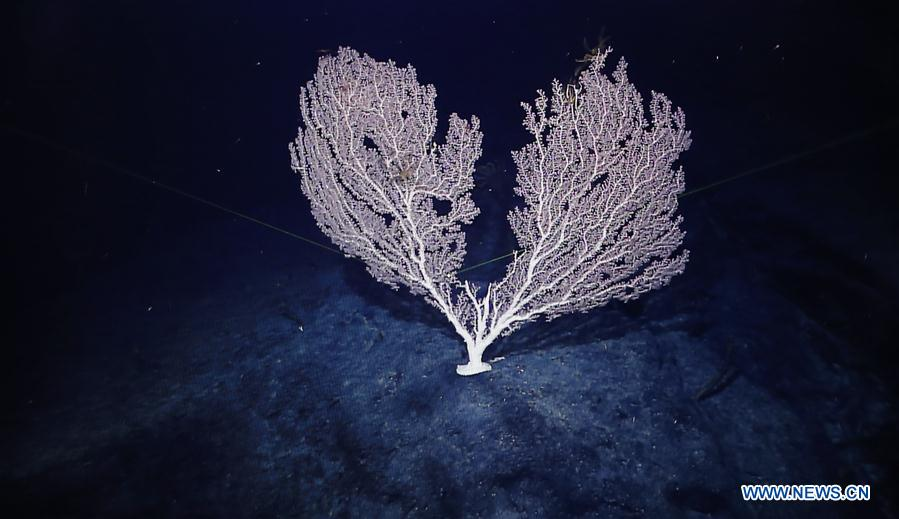 Corals seen in west Pacific on Chinese research vessel Kexue