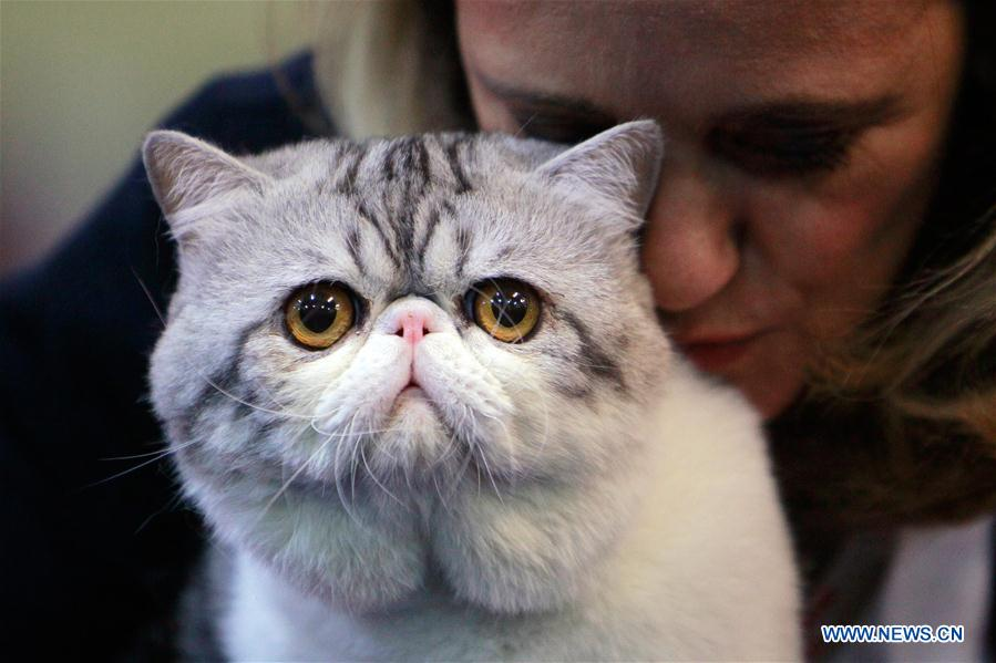SofistiCat feline beauty contest held in Bucharest, Romania