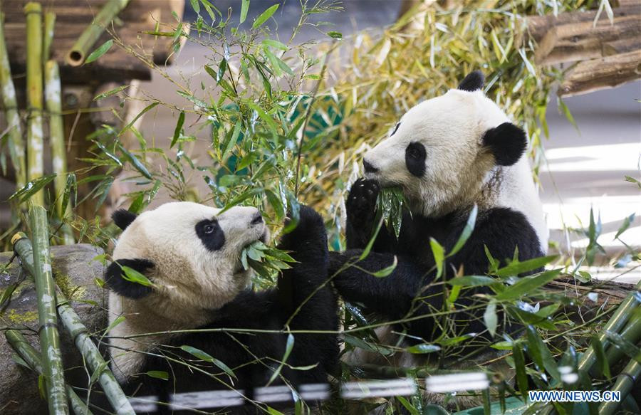 Hangzhou to build giant panda research and breeding center