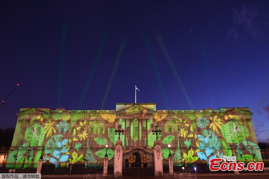 Buckingham Palace illuminated by rainforest projection