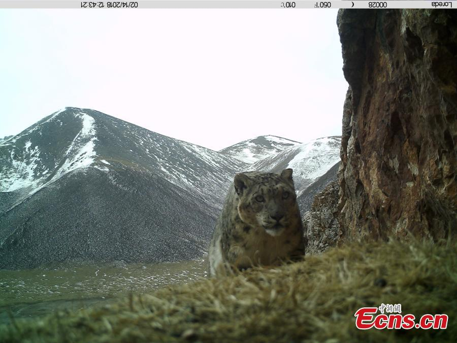 Many wild animals found on Anemaqen Mountain