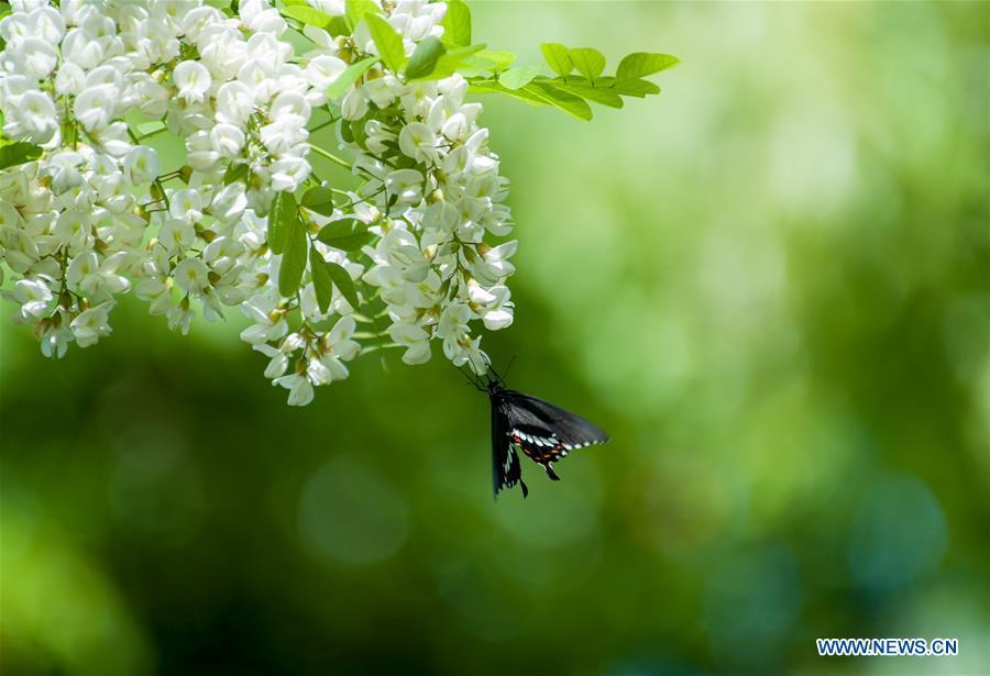 Butterflies resting on flowers in Shanghai