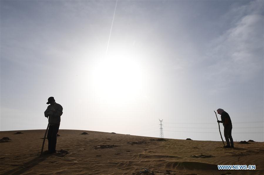 Workers devote themselves into desertification control of Kubuqi Desert in N China