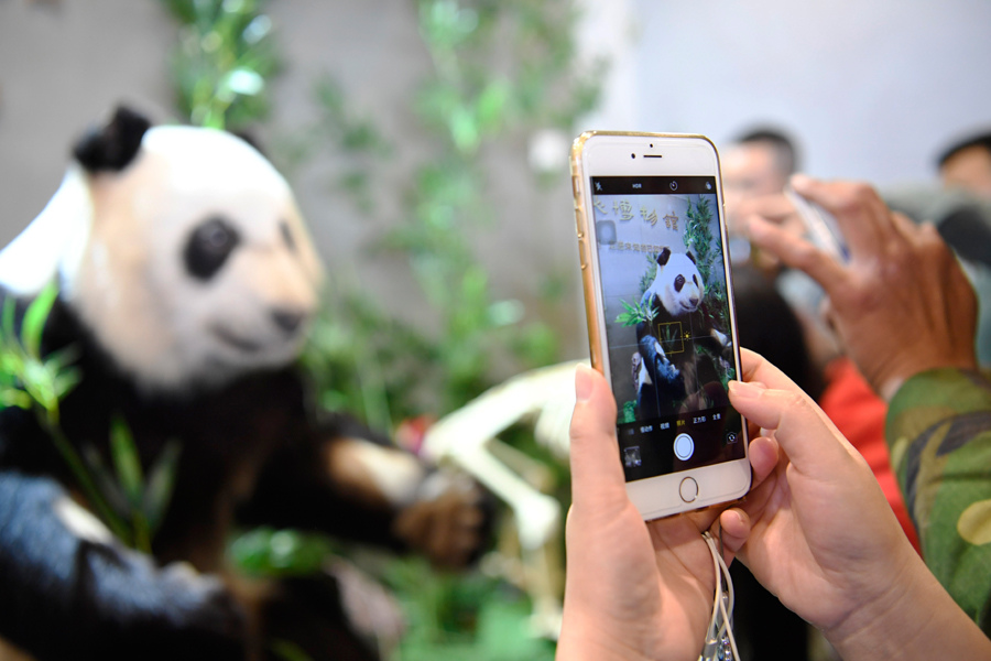 World's first plastinated giant panda displayed in Chengdu