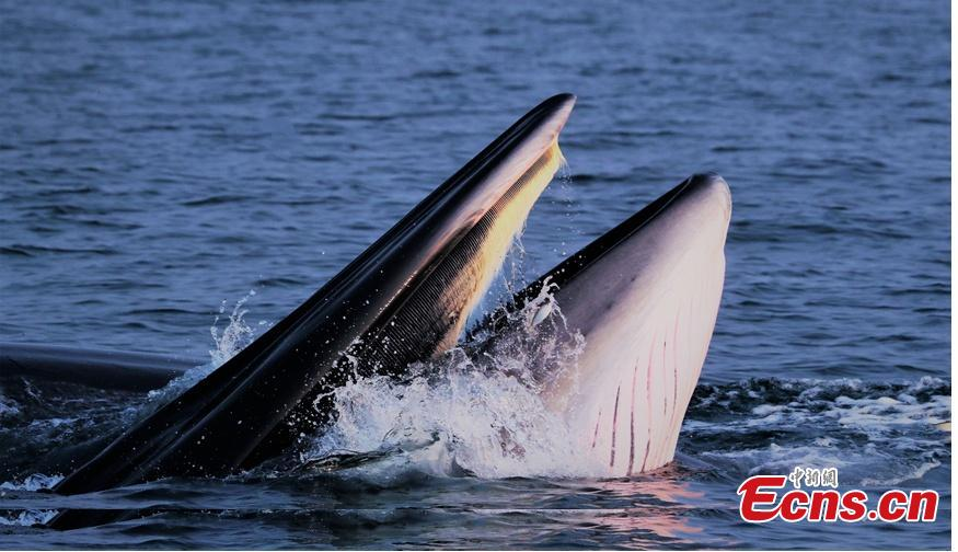 Whale pod found near shore in south China