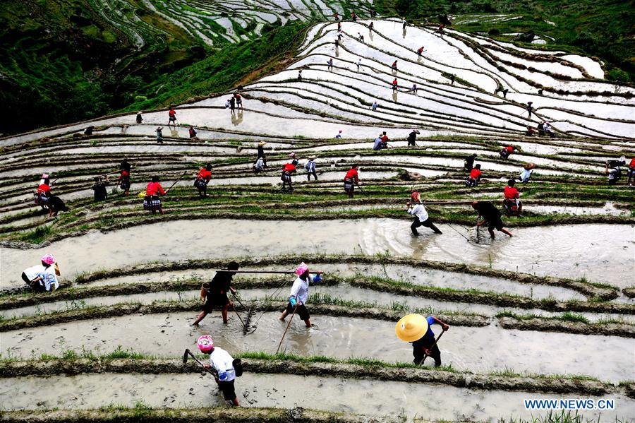 Spring plough kicks off in China's Guangxi