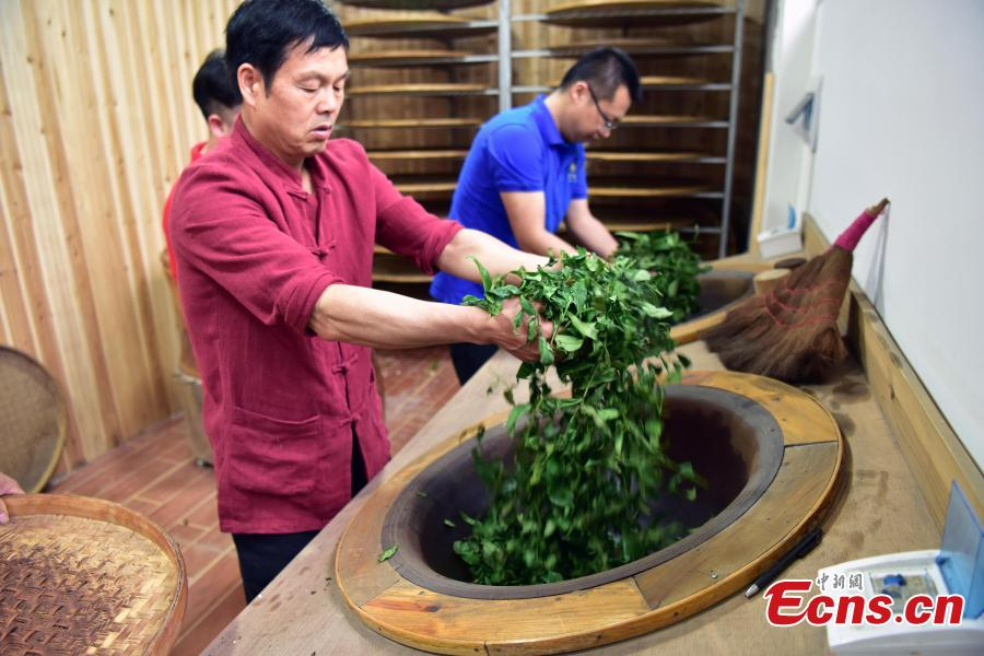 Ancient tea-making craft kept live in Wuyi Mountains