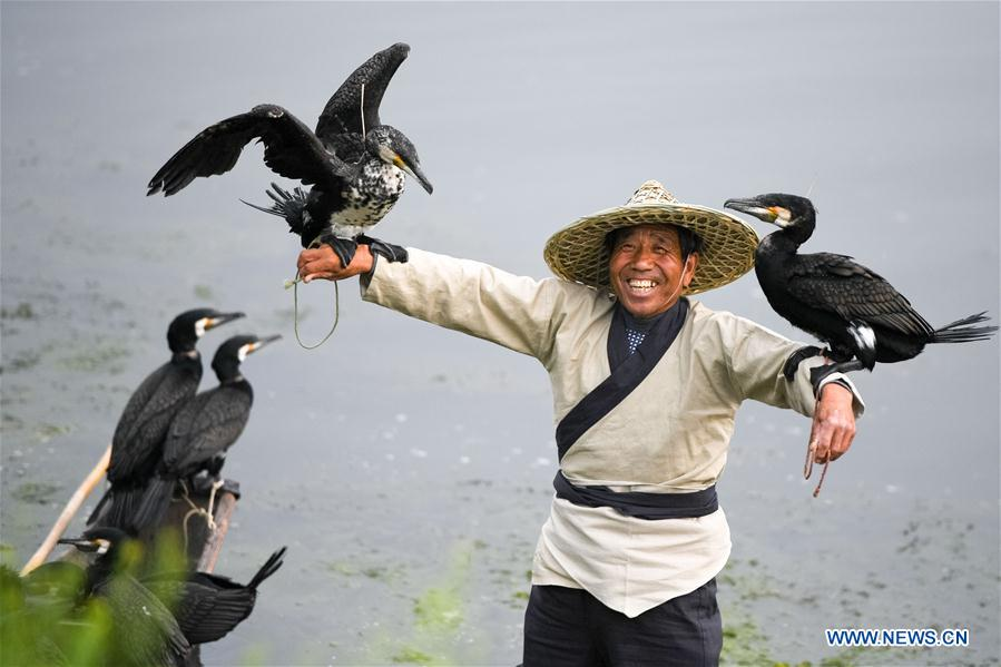Cormorant fishing show on Suihe River