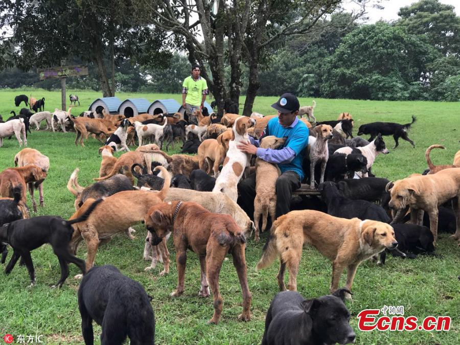 Costa Rican paradise shelters 1,000 stray dogs
