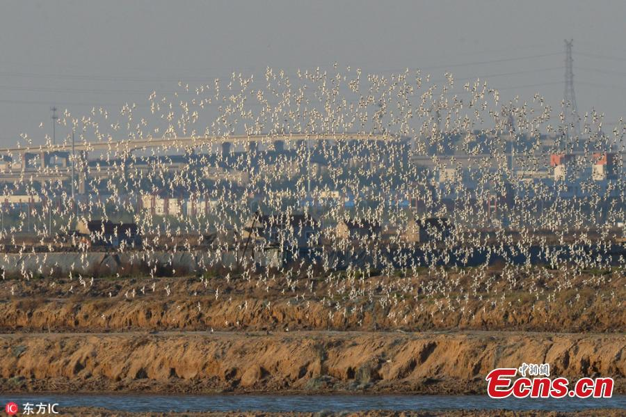 Wading birds arrive en masse at eastern wetland