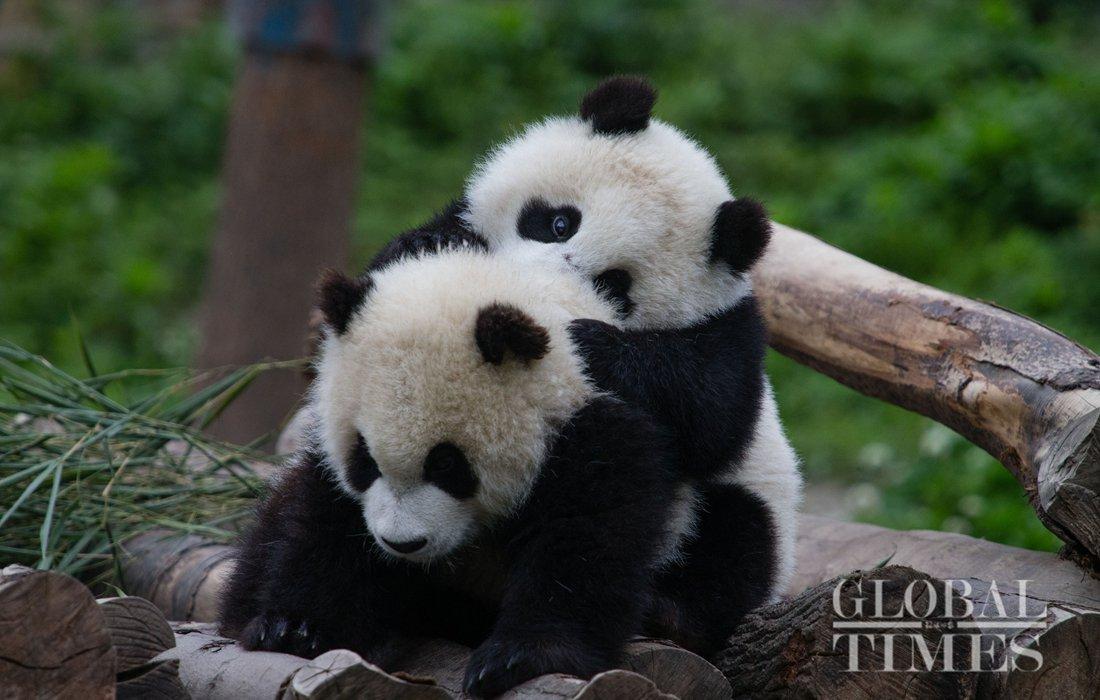 China News Service Website Headlines Stories Photos