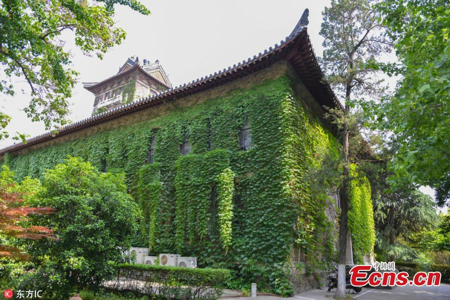 Century-old university building cloaked in creeper plants