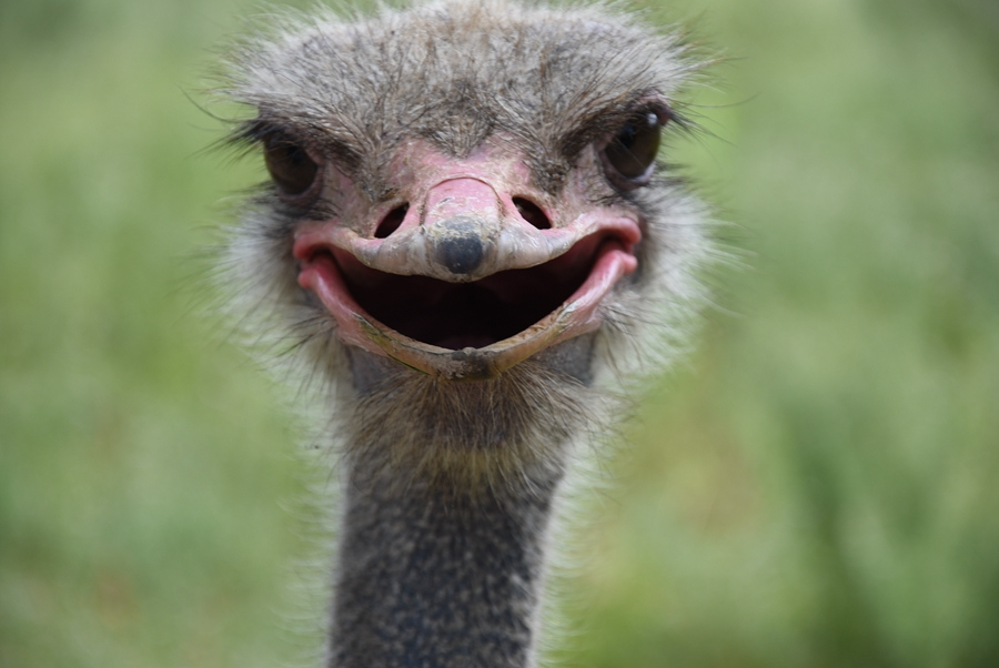 Animals' expressions cheer World Smile Day