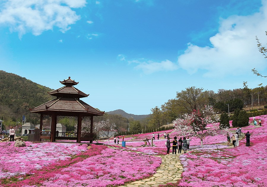 Field of moss phlox delight state guest house in Dalian